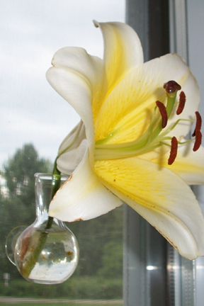 Add one flower or many. Vase sticks to windows, mirrors and more
